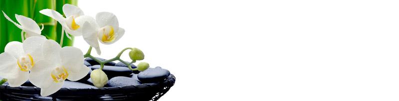 pin nischenr ckwand mit kr uter motiv ab 119 00 on pinterest. Black Bedroom Furniture Sets. Home Design Ideas